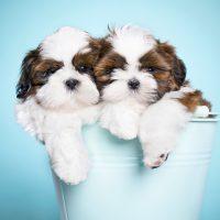 Puppytijd